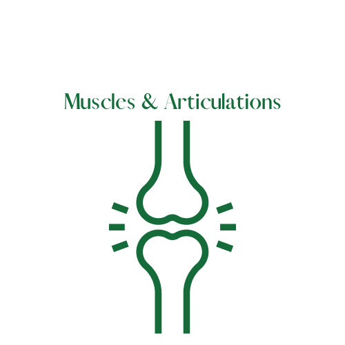 Muscles & Articulations